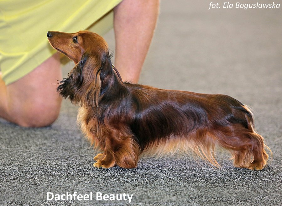Dachfeel Beauty 3