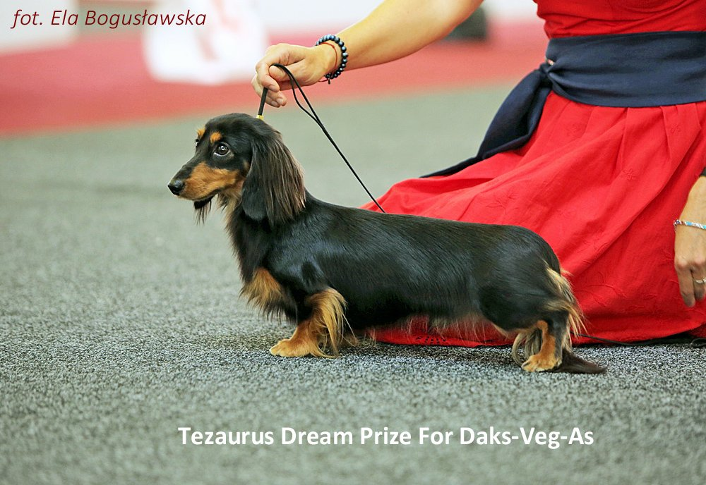 Tezaurus Dream Prize For Daks Veg As