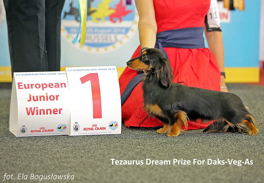 Tezaurus Dream Prize For Daks Veg As 2